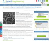 Engineering Nature: DNA Visualization and Manipulation