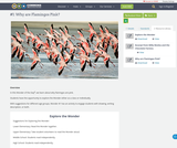 #1: Why are Flamingos Pink?